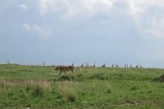 Kenya Safari February 2017