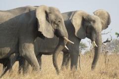 Zambia Safari September 2017