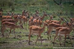 Kenya_August_2018-0302
