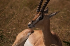 Kenya_August_2018-0393