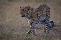 Kenya_August_2018-0827