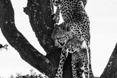 Kenya-January-2020-4128