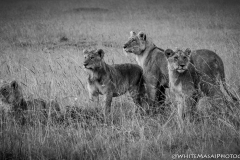 Kenya-January-2020-4275